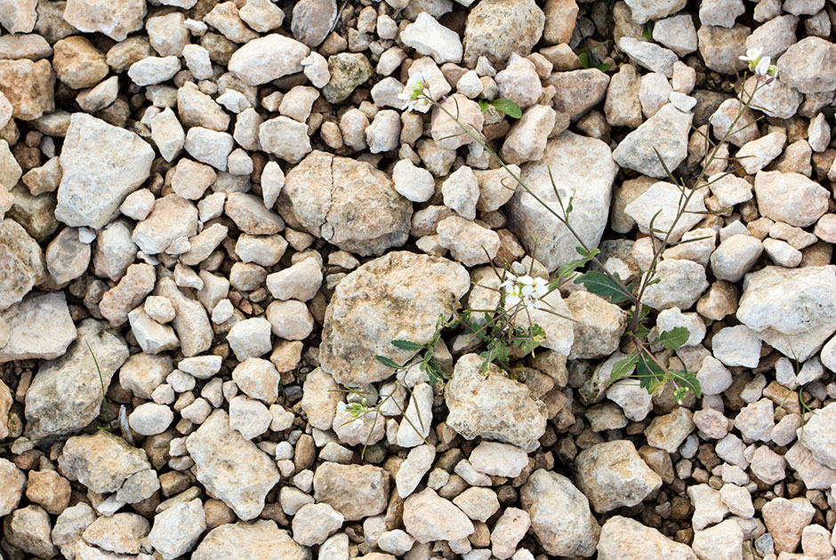 El suelo altamente vinos 100 monastrell jumilla espa a for Suelos para jardines fotos